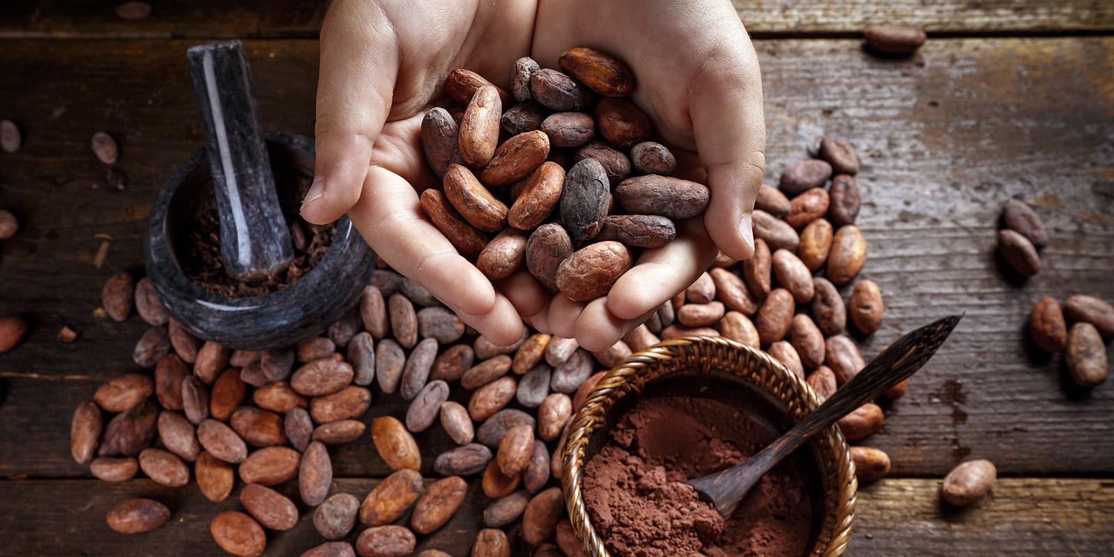 Contact Xocolate Chocolatier in Carlisle Cumbria